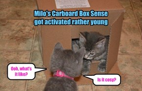 Milo's Carboard Box Sense  got activated rather young