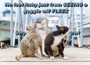 We feel itchy just from SEEING a goggie wif FLEEZ          owy                             ew!