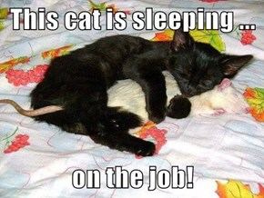 This cat is sleeping ...  on the job!