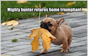 Mighty hunter returns home triumphant