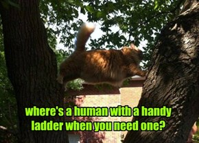 where's a human with a handy ladder when you need one?