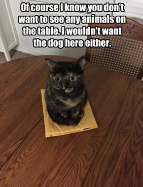 Of course I know you don't want to see any animals on the table. I wouldn't want the dog here either.