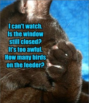 I can't watch. Is the window still closed? It's too awful. How many birds on the feeder?