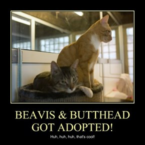 BEAVIS & BUTTHEAD GOT ADOPTED!