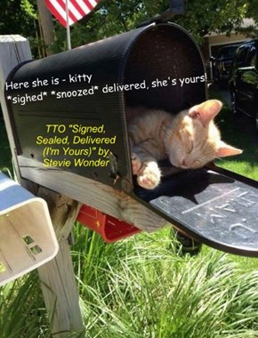 """""""Kitty Delivery"""" (TTO """"Signed, Sealed, Delivered (I'm Yours)"""" by Stevie Wonder)"""