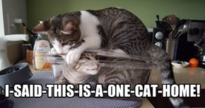 I-SAID-THIS-IS-A-ONE-CAT-HOME!