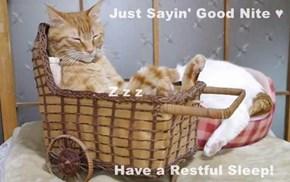 Just Sayin' Good Nite ♥                        Z z z                      Have a Restful Sleep!