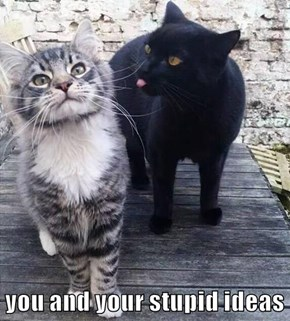 you and your stupid ideas
