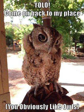YOLO!                                                  Come on back to my place  (You Obviously Like Owls)