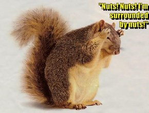 """""""Nuts! Nuts! I'm                                                                                          surrounded                                                                                                            by nuts!"""""""