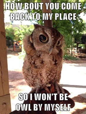 HOW BOUT YOU COME BACK TO MY PLACE  SO I WON'T BE                                       OWL BY MYSELF