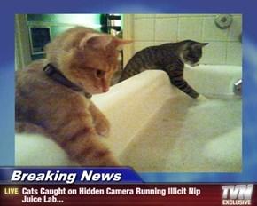 Breaking News - Cats Caught on Hidden Camera Running Illicit Nip Juice Lab...
