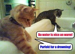 Don't taeks a baffs, no matter wat yur cats sez!