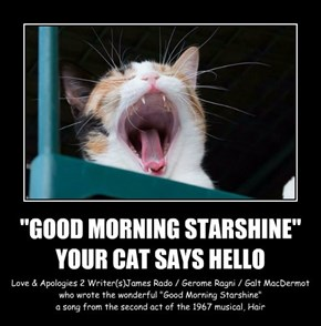 """GOOD MORNING STARSHINE"" YOUR CAT SAYS HELLO"