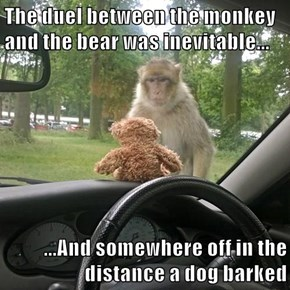 The duel between the monkey and the bear was inevitable...  ...And somewhere off in the distance a dog barked