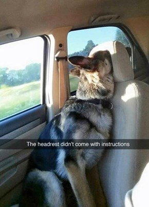 Instructions Unclear, Turned Into a Dog and Got Stuck in a Headrest