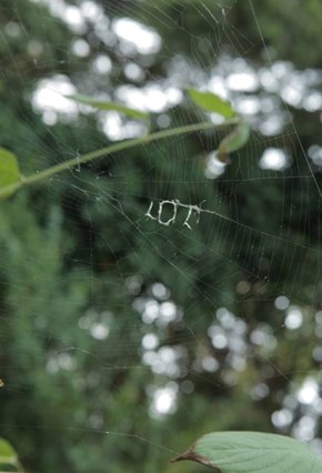 This Spider Took One Look at Your Life And...