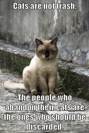 Cats are not trash.  The people who abandon their cats are the ones who should be discarded.