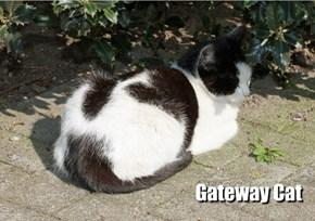 Gateway Cat