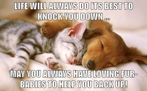 LIFE WILL ALWAYS DO ITS BEST TO KNOCK YOU DOWN ...  MAY YOU ALWAYS HAVE LOVING FUR-BABIES TO HELP YOU BACK UP!