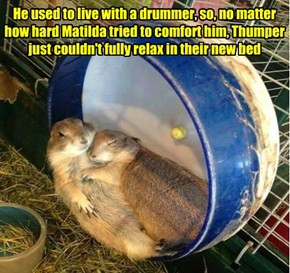 Thumper's nightly woes