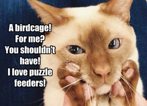 A birdcage! For me? You shouldn't have! I love puzzle feeders!