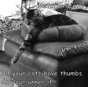 Metafurracatly,  All your cats have thumbs. An your unner it.