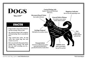 The Guide to What a Dog Is