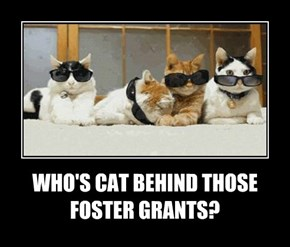 WHO'S CAT BEHIND THOSE FOSTER GRANTS?