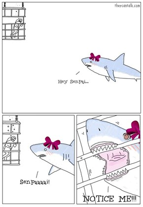 What The Sharks Are Like Near Japan