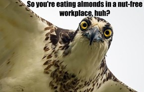 Creeper Bird is Watching You @ Work #77