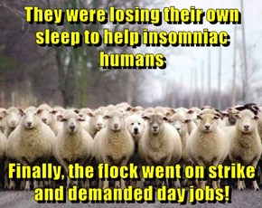 They were losing their own sleep to help insomniac humans   Finally, the flock went on strike and demanded day jobs!