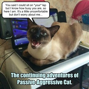 The continuing adventures of Passive-Aggressive Cat.
