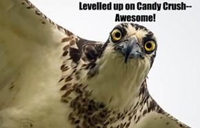 Creeper Bird is Watching You @ Work #1
