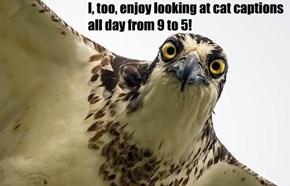 Creeper Bird is Watching You @ Work #1682