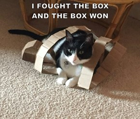 I FOUGHT THE BOX                                  AND THE BOX WON