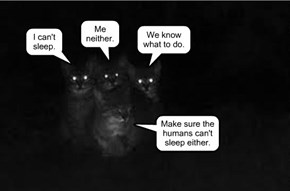 Insomnia: share it with a friend.