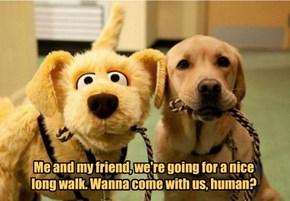 Me and my friend, we're going for a nice long walk. Wanna come with us, human?