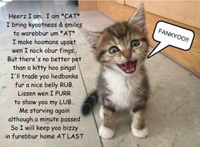 I  am *CAT*
