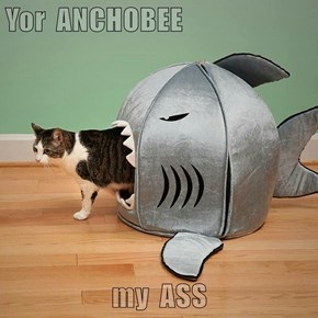 Yor  ANCHOBEE  my  ASS