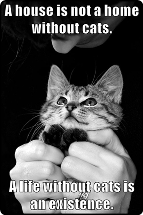 A house is not a home without cats.  A life without cats is an existence.