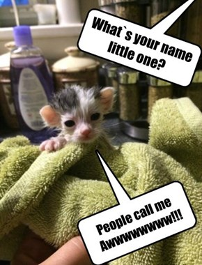 What`s your name little one?