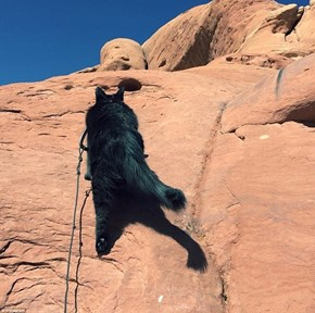 This Adventurous Cat Has Climbed Mountains