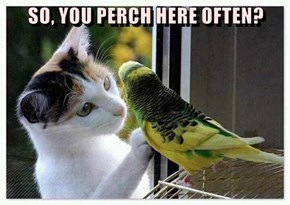 SO, YOU PERCH HERE OFTEN?