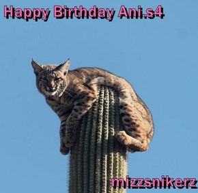 Happy Birthday Ani.s4   mizzsnikerz