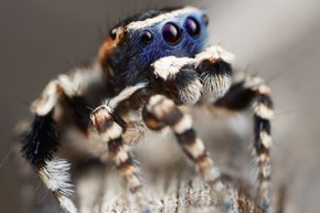 Adorbs of the Day: Scientists Find the Cutest Spider Ever