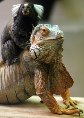 Onward, Dragon Steed!