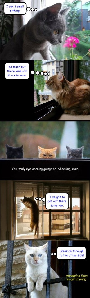 Caption these: window kitties (recaption links in comments)