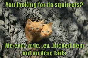 You looking for da squirrels?  We evix..avic...ev...kicked dem out on dere tails