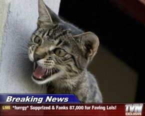 Breaking News - *furrgy* Supprized & Fanks 87,000 fur Faving Lols!